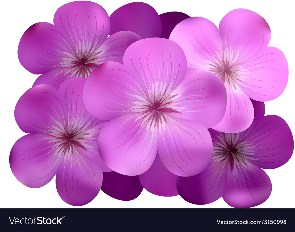 Phlox vector | Price: 1 Credit (USD $1)