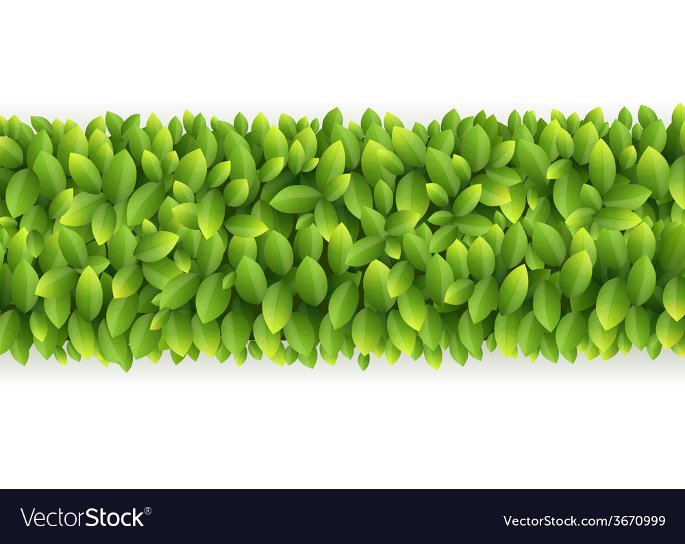 Fresh green leaves line vector | Price: 1 Credit (USD $1)