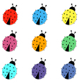 Set of colorful ladybird vector