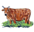 Curious cow vector