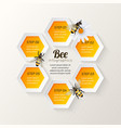 Bee infographics steps vector