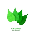 Green leaves spring background vector