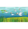 Ducks looking for foods vector