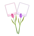 Two beautiful tulip flowers with blank photos vector