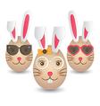 Easter bunny eggs vector