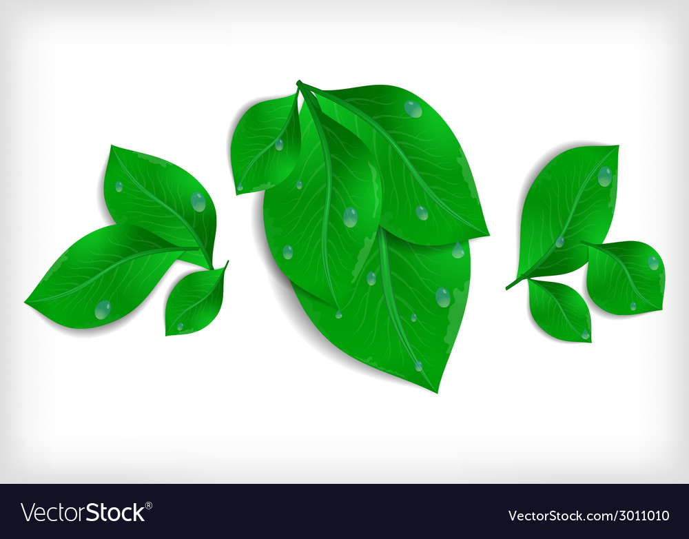 Green leaves with waterdrops vector | Price: 1 Credit (USD $1)