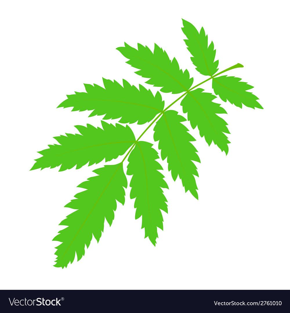 Green rowan leaf vector   Price: 1 Credit (USD $1)