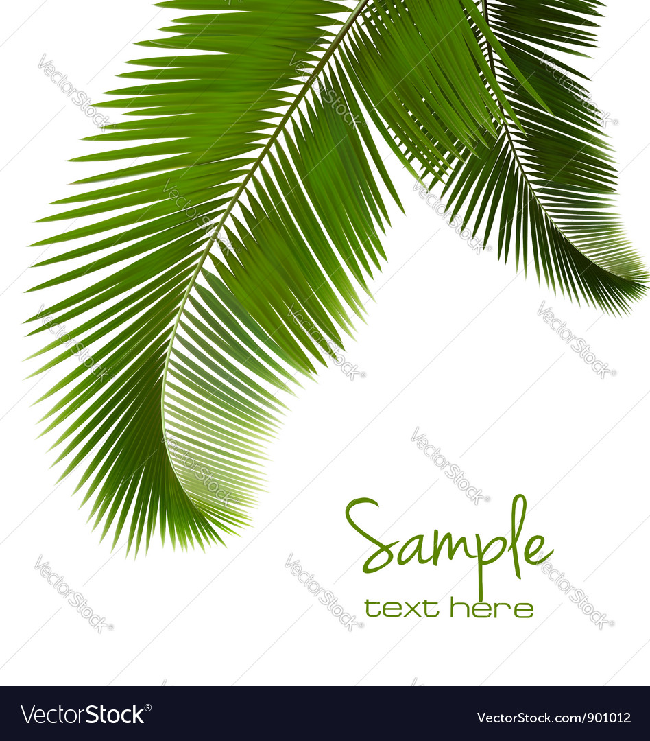 Palm leaves on white background vector | Price: 3 Credit (USD $3)