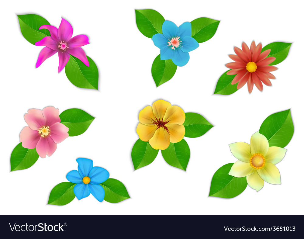Big set of beautiful flowers on white background vector | Price: 1 Credit (USD $1)