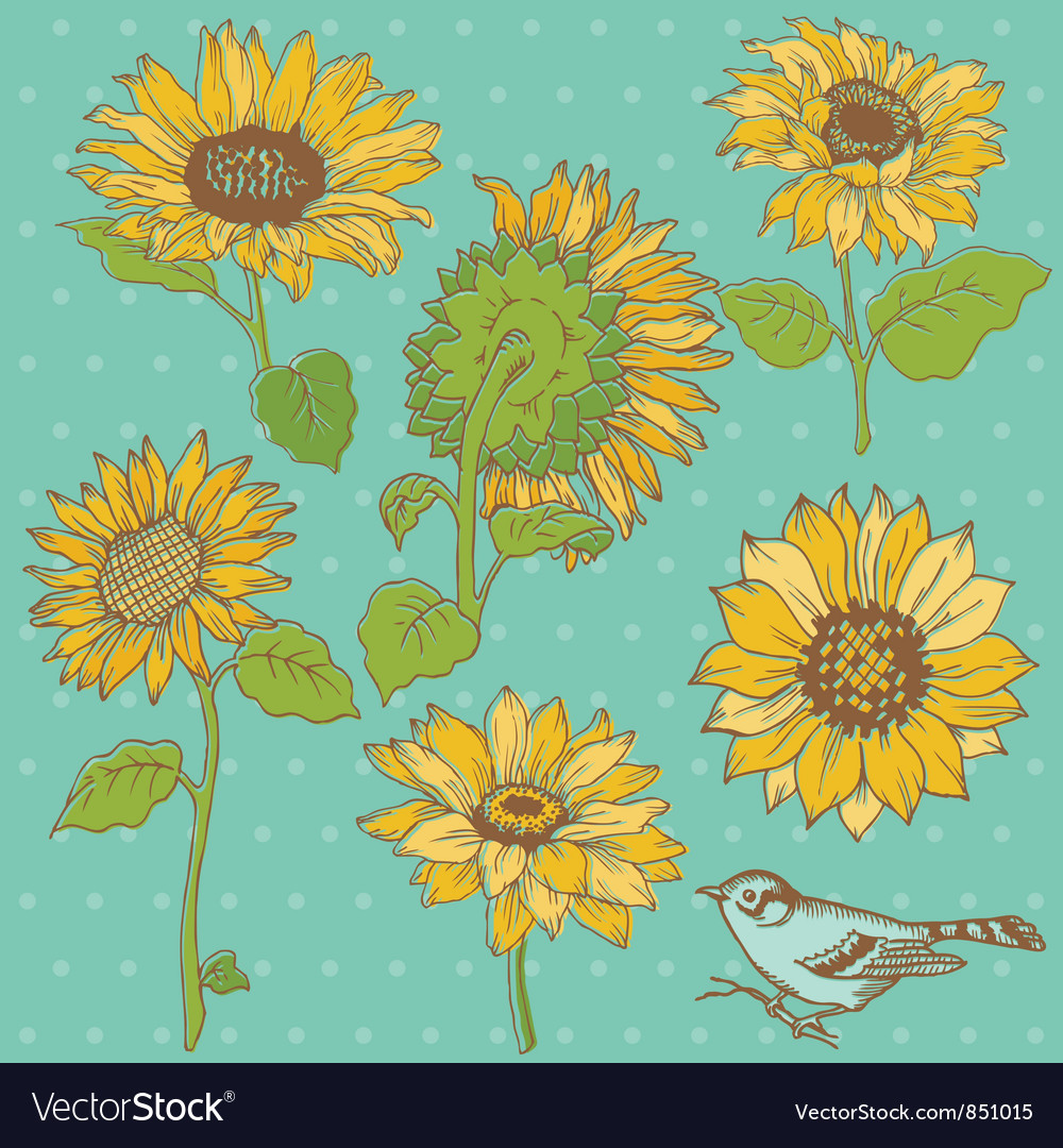 Flower set detailed hand drawn sunflowers vector | Price: 1 Credit (USD $1)