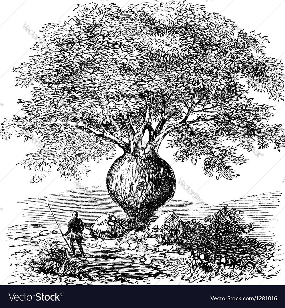 Bottle tree vintage engraving vector | Price: 1 Credit (USD $1)