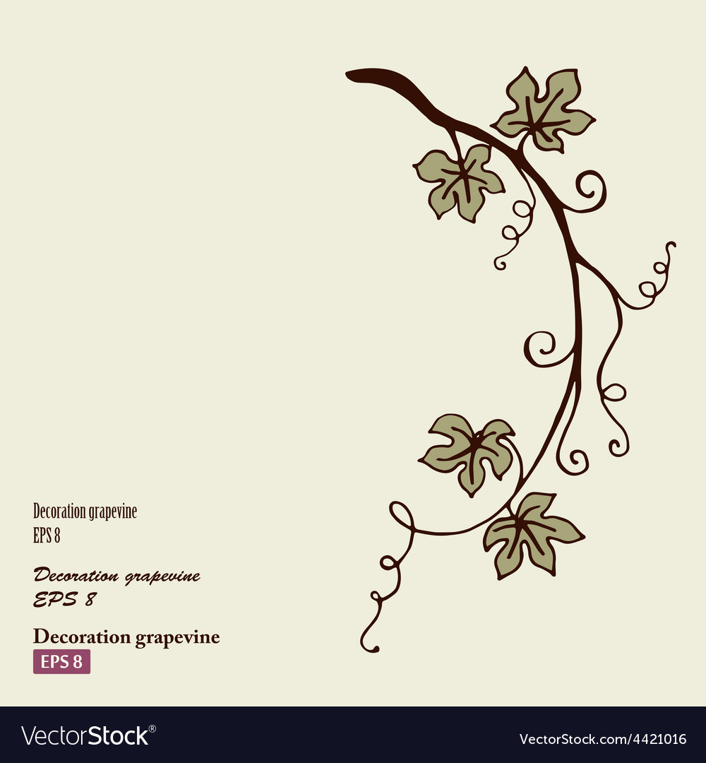 Decoration grape vine vector | Price: 1 Credit (USD $1)