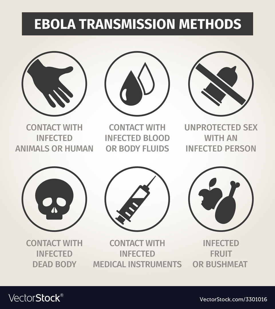 Set icons ebola virus ways of transmission vector | Price: 1 Credit (USD $1)