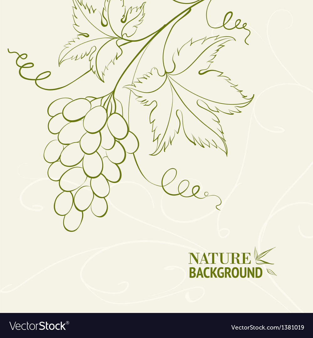 Grape wine card vector | Price: 1 Credit (USD $1)