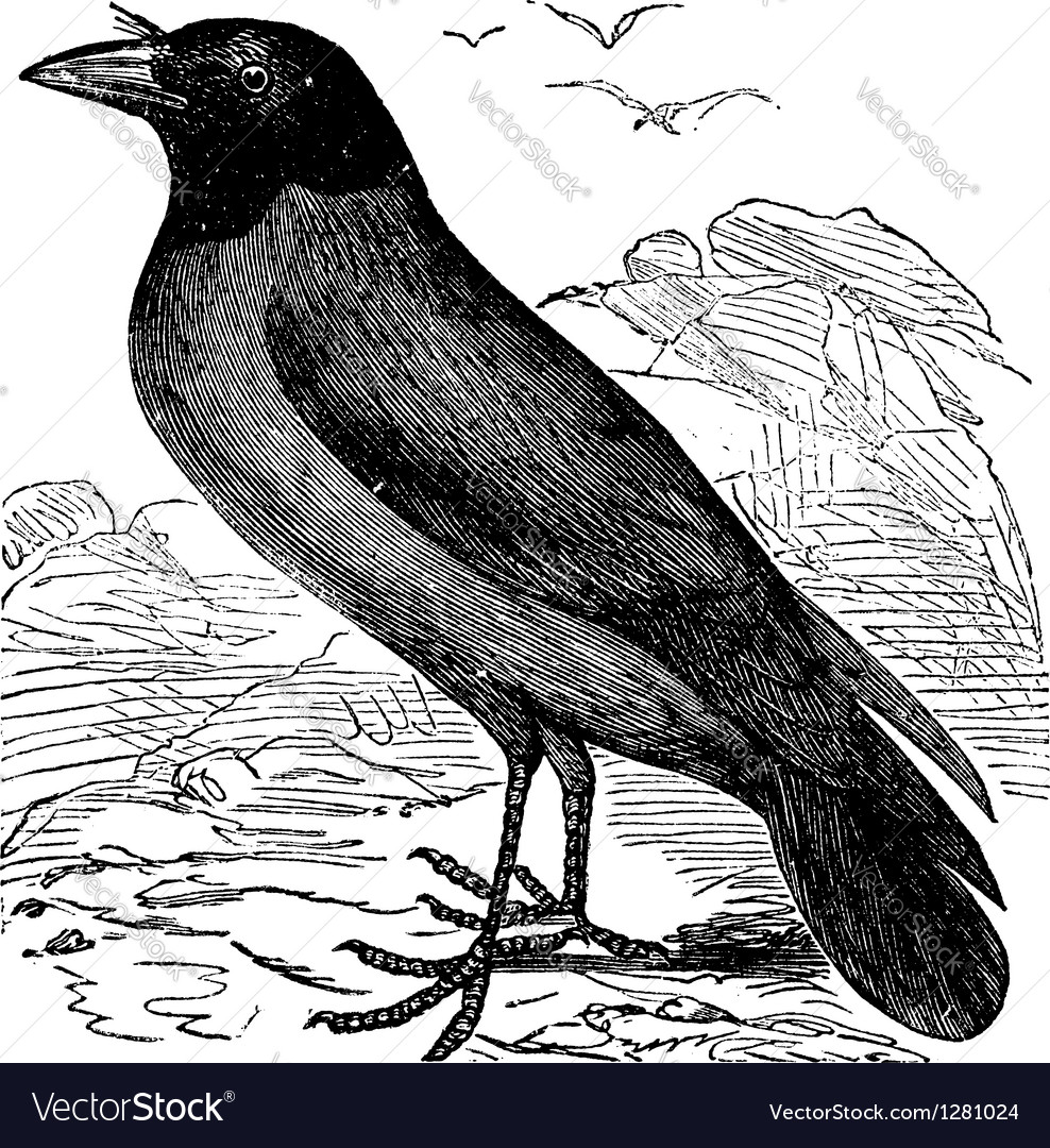Hooded crow vintage engraving vector | Price: 1 Credit (USD $1)