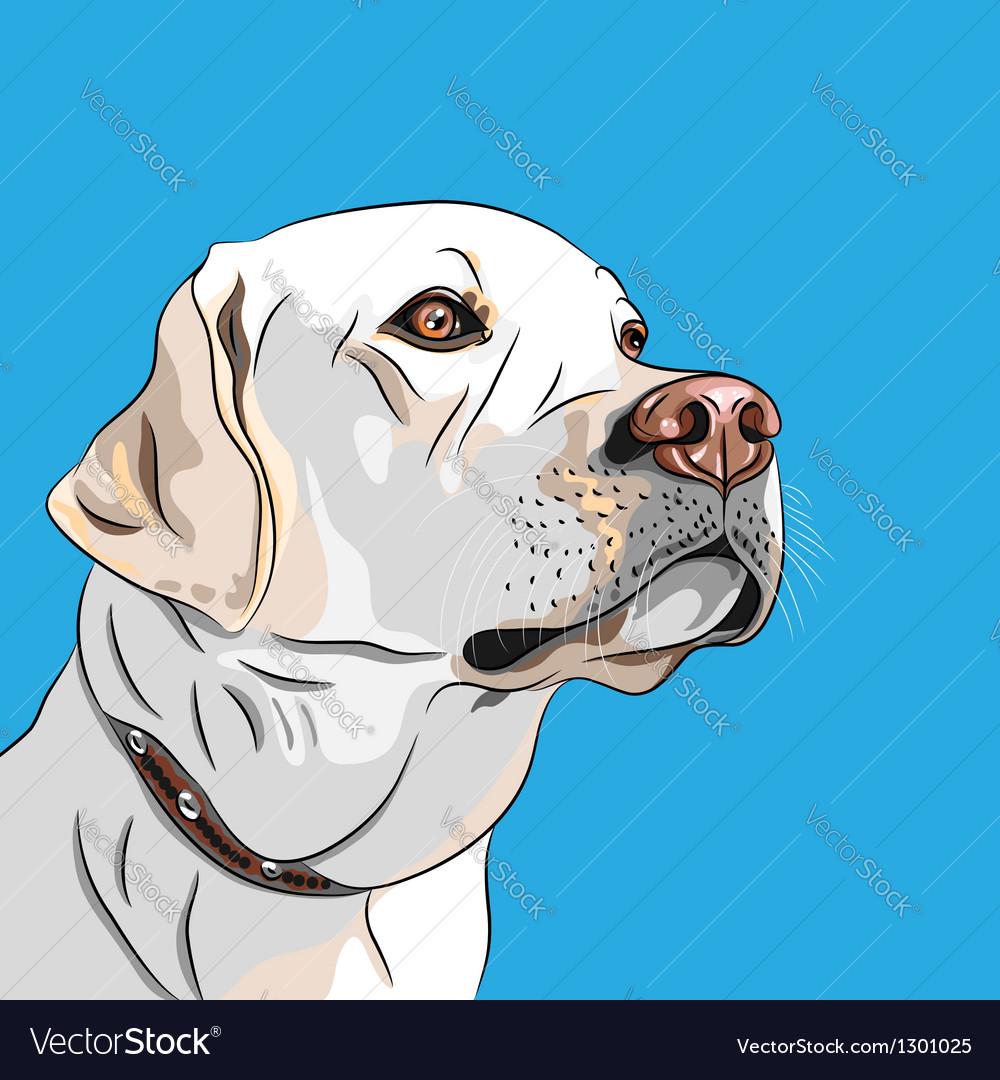 White dog breed labrador retriever vector | Price: 3 Credit (USD $3)