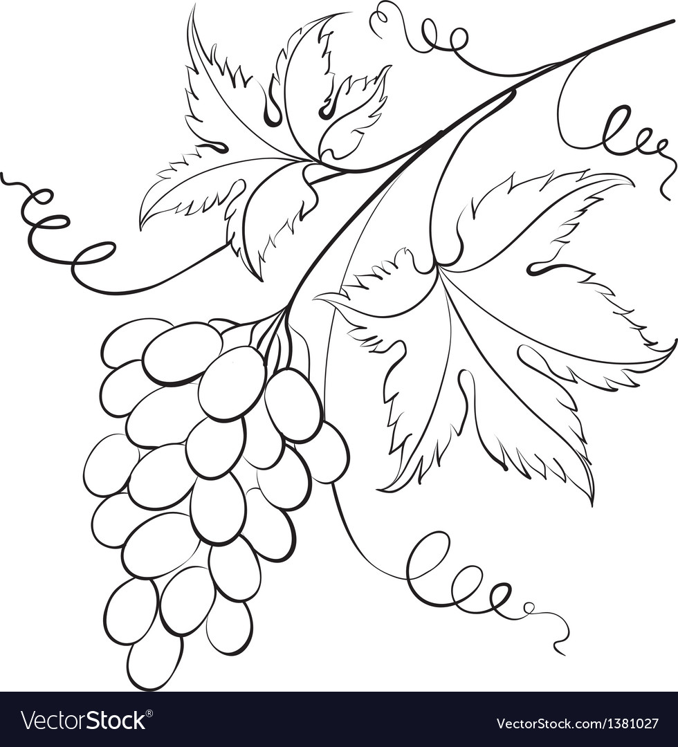 Bunch of grapevine vector | Price: 1 Credit (USD $1)
