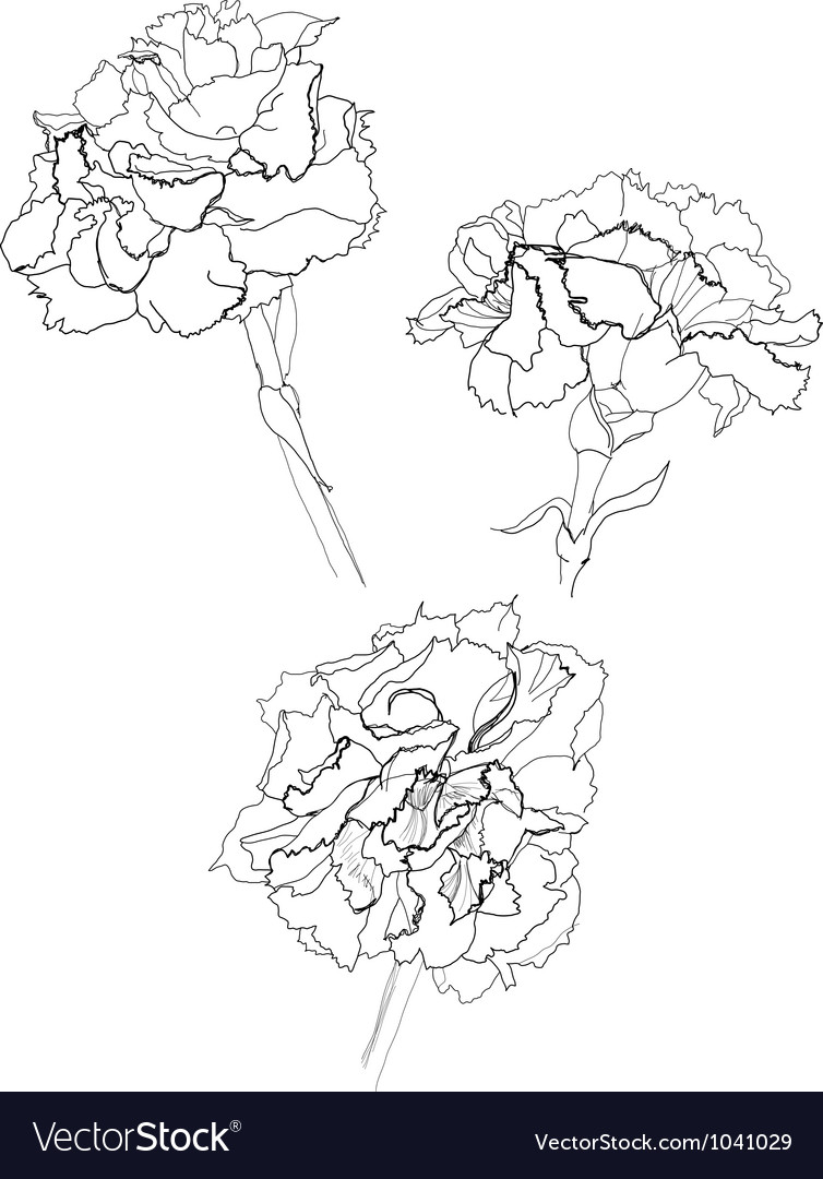 Carnation vector | Price: 1 Credit (USD $1)