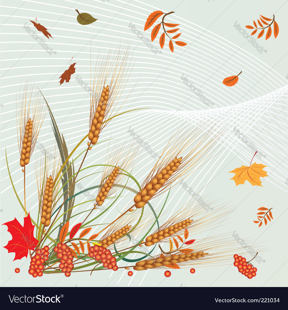 Autumn leaves and ears vector   Price: 1 Credit (USD $1)