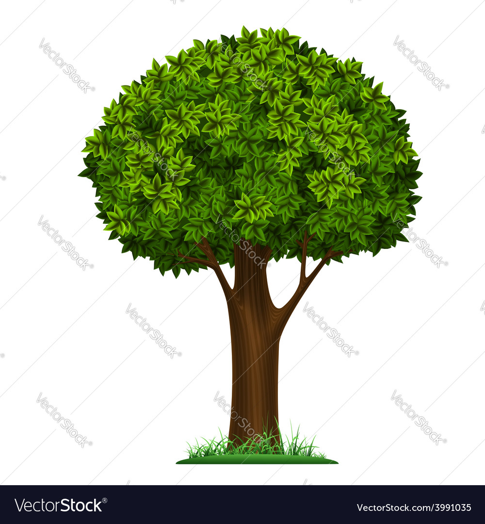 Tree isolated on white background vector | Price: 1 Credit (USD $1)