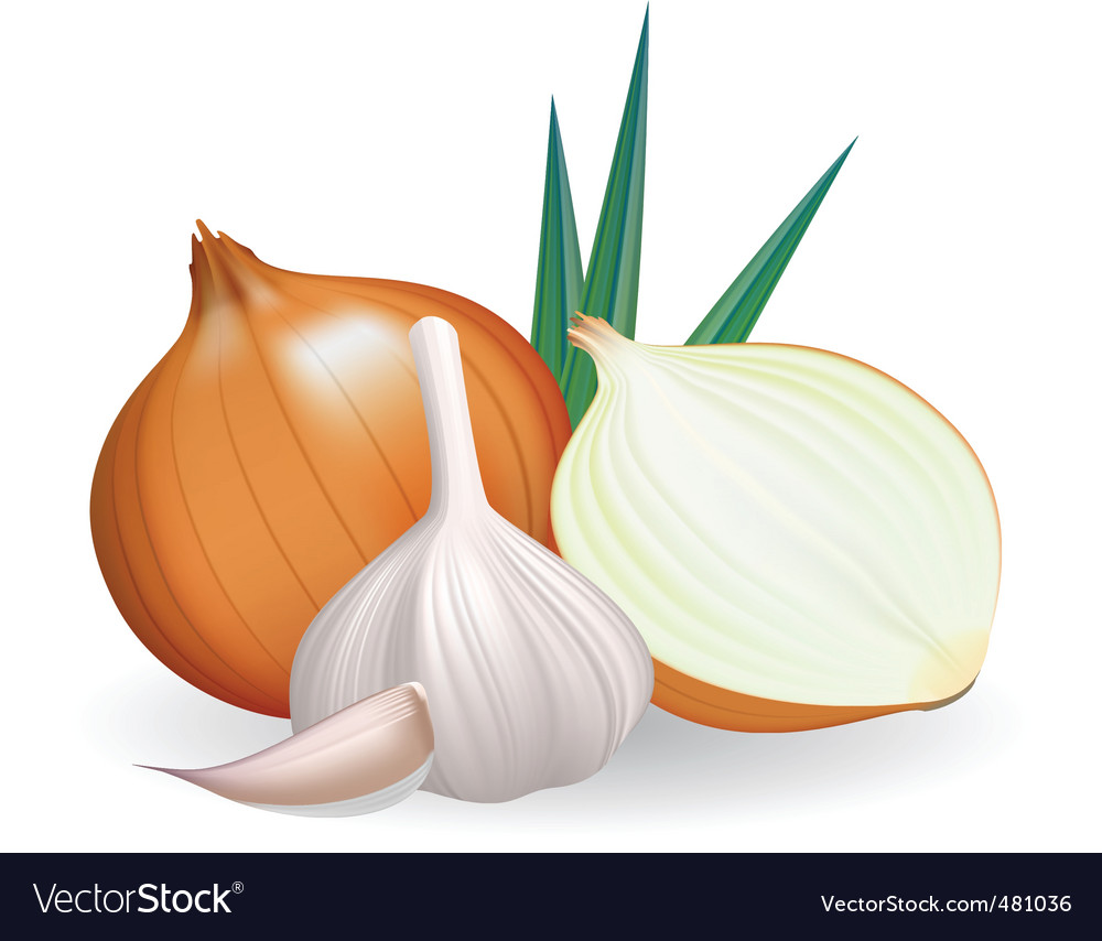 Onion and garlic vector | Price: 1 Credit (USD $1)