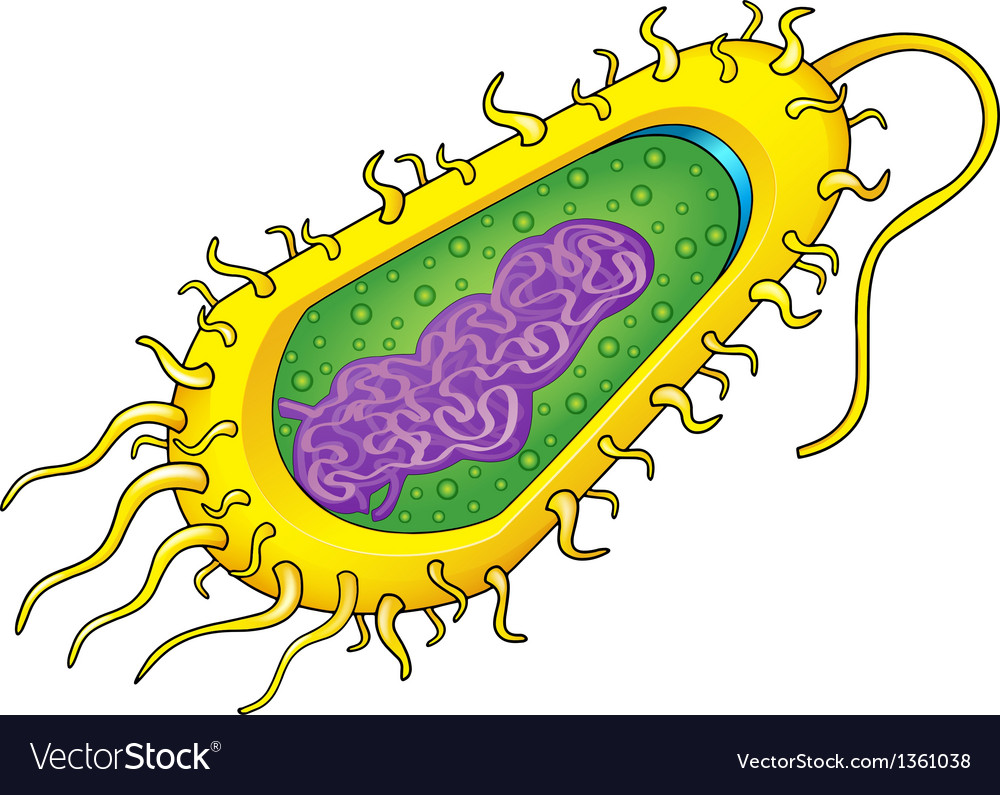 Bacteria cell vector | Price: 1 Credit (USD $1)
