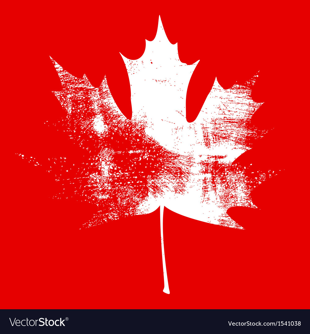 Grunge maple leaf white vector   Price: 1 Credit (USD $1)