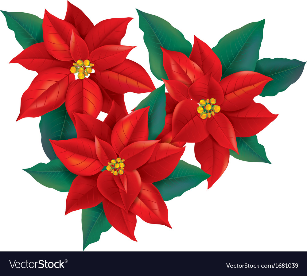 Red poinsettia christmas flower vector | Price: 1 Credit (USD $1)