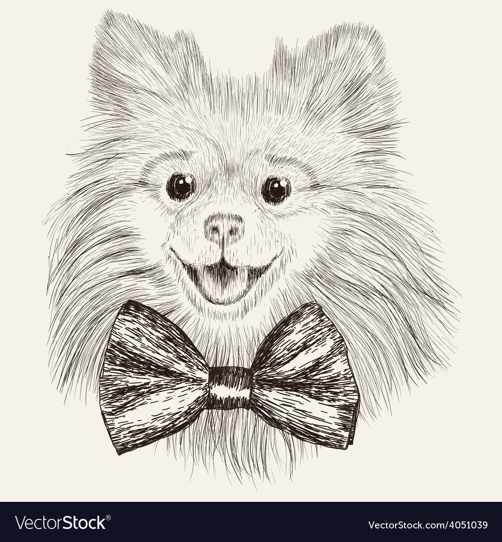 Sketch spitz with bow tie hand drawn dog vector | Price: 1 Credit (USD $1)