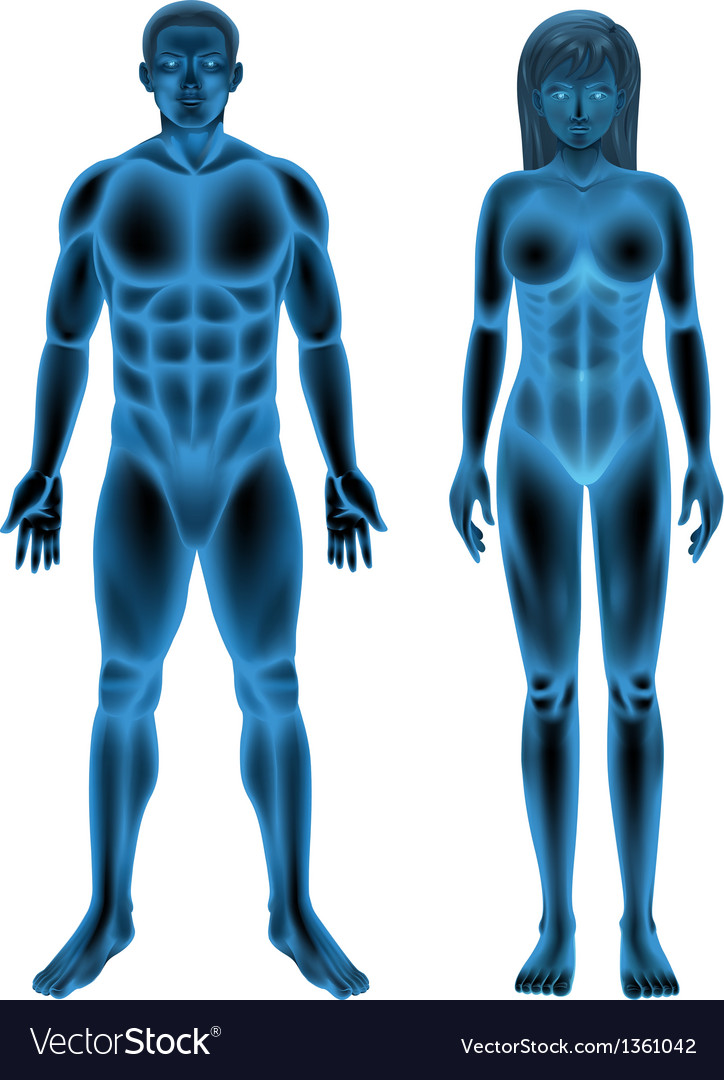 Male female human body vector | Price: 1 Credit (USD $1)