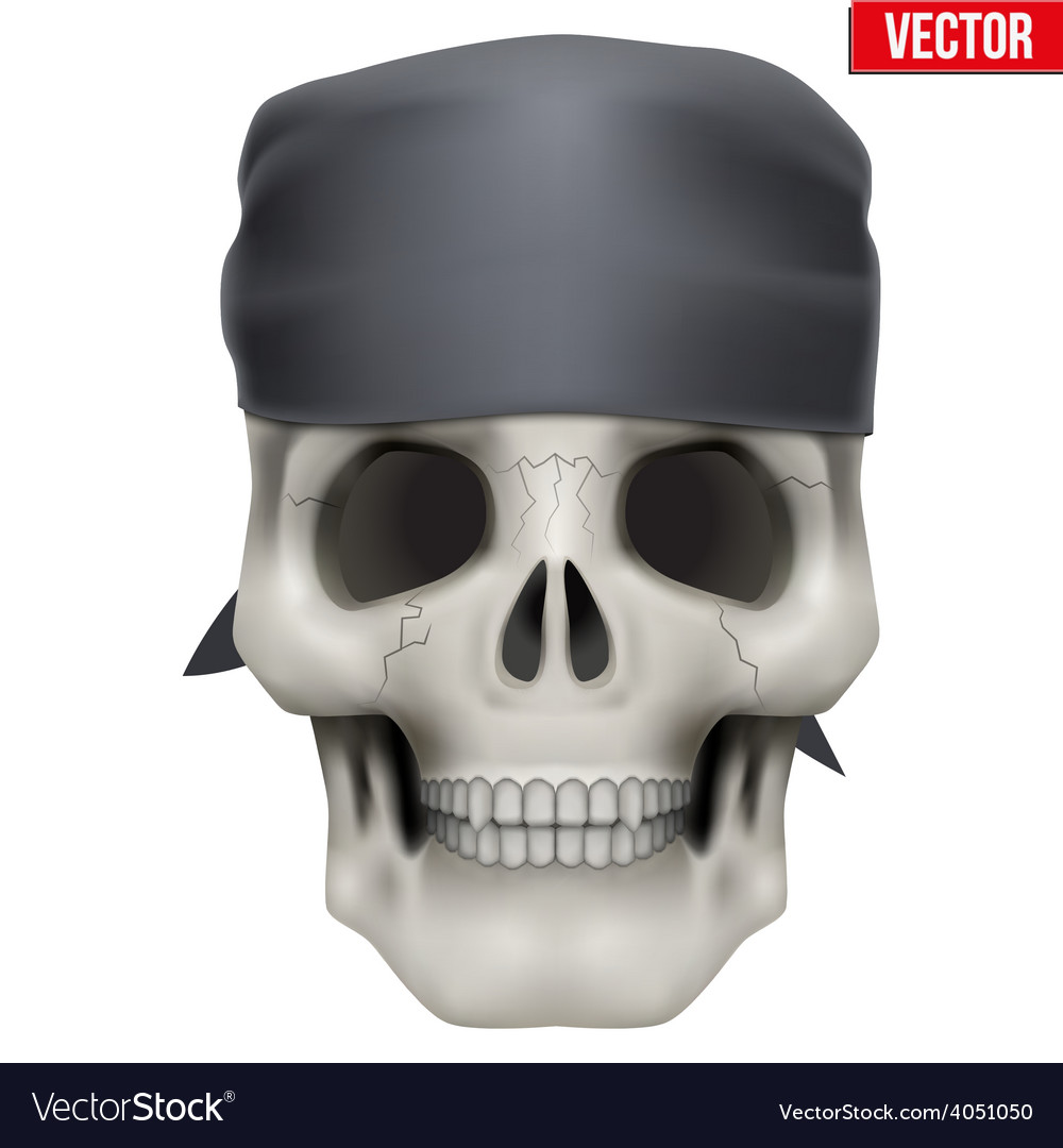 Human skull with bandana on head vector | Price: 3 Credit (USD $3)