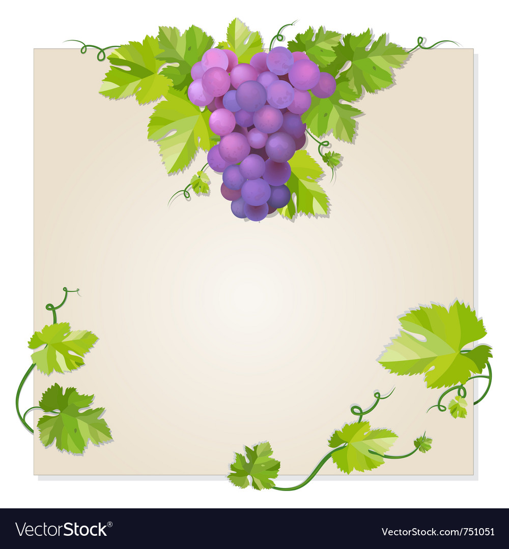 Black grapes vector   Price: 1 Credit (USD $1)