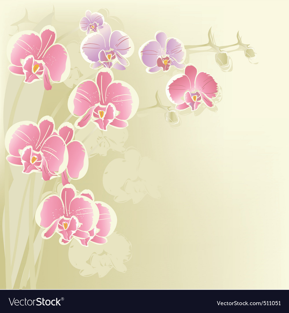 Stylized orchid vector | Price: 1 Credit (USD $1)