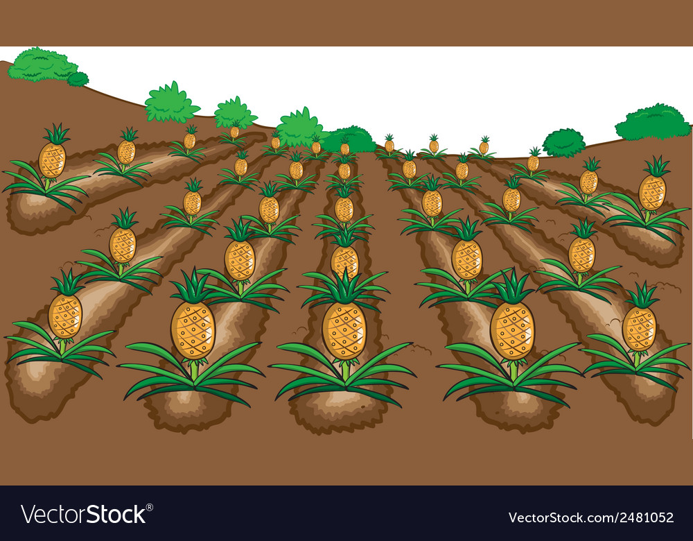 Pineapples fruit cartoon vector   Price: 1 Credit (USD $1)