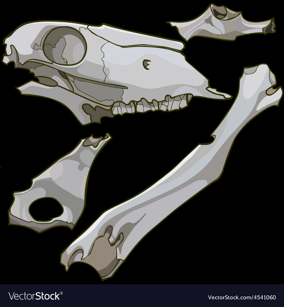 Skull fragments and animal bones vector | Price: 3 Credit (USD $3)