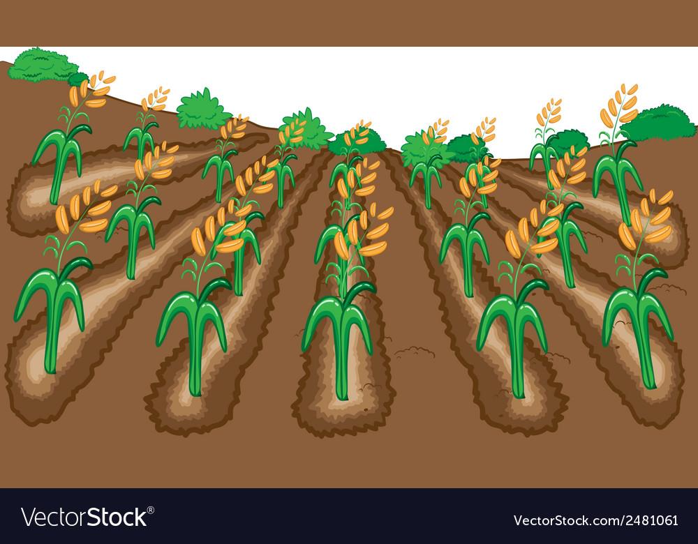 Raw of rice cartoon vector | Price: 1 Credit (USD $1)