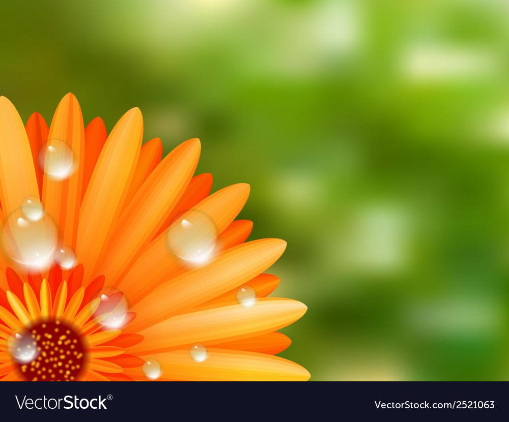 Gerber petals with water drops plus eps10 vector | Price: 1 Credit (USD $1)
