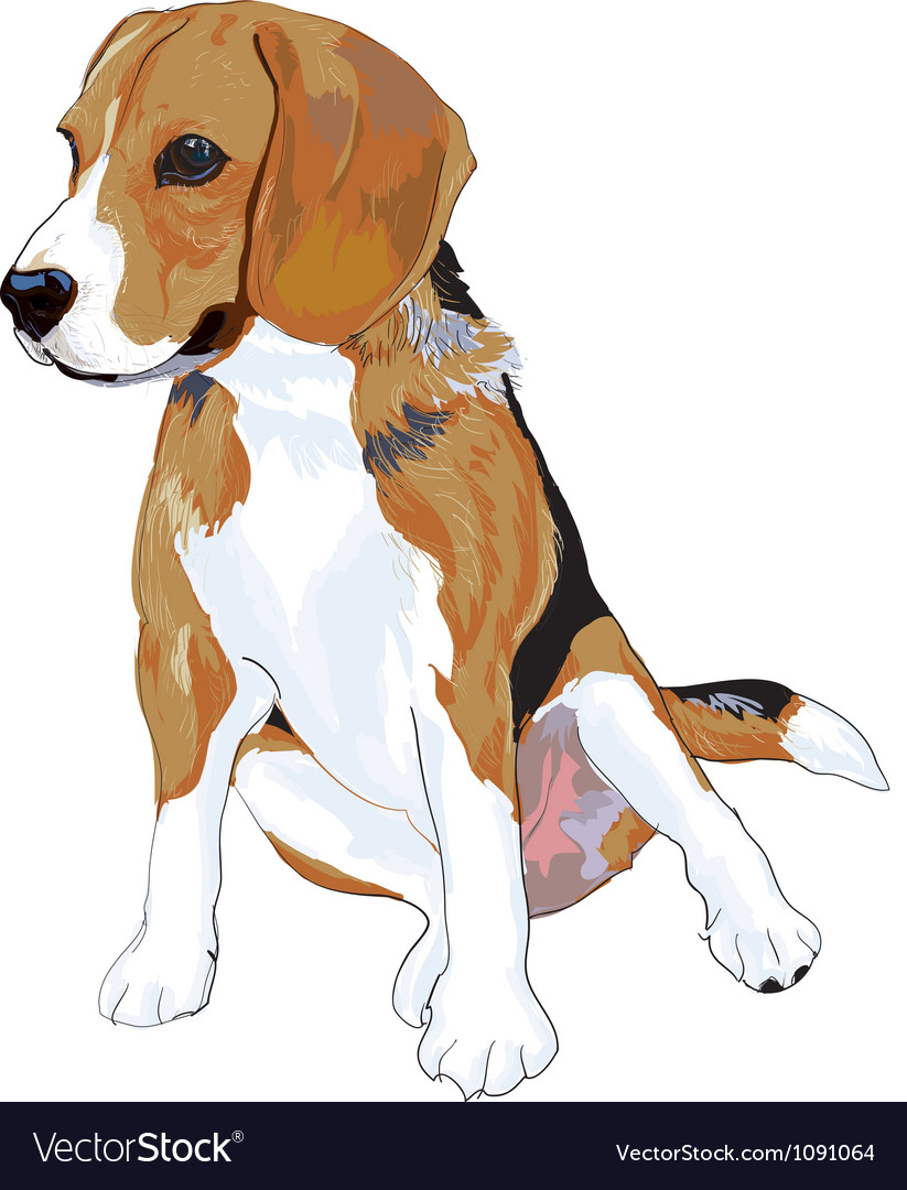 Beagle vector | Price: 5 Credit (USD $5)