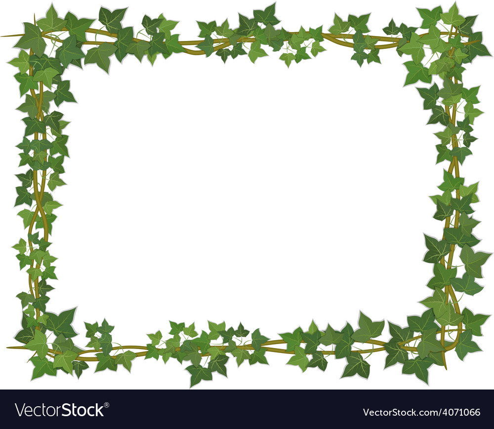 Ivy square frame vector | Price: 1 Credit (USD $1)