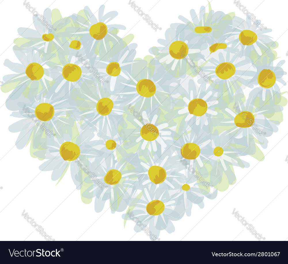 Summer bouquet heart shape made from daisy sketch vector | Price: 1 Credit (USD $1)