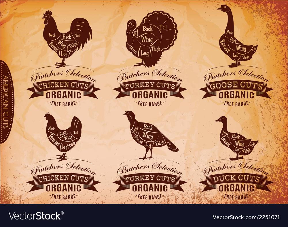 Diagram cut carcasses chicken turkey goose duck vector | Price: 1 Credit (USD $1)