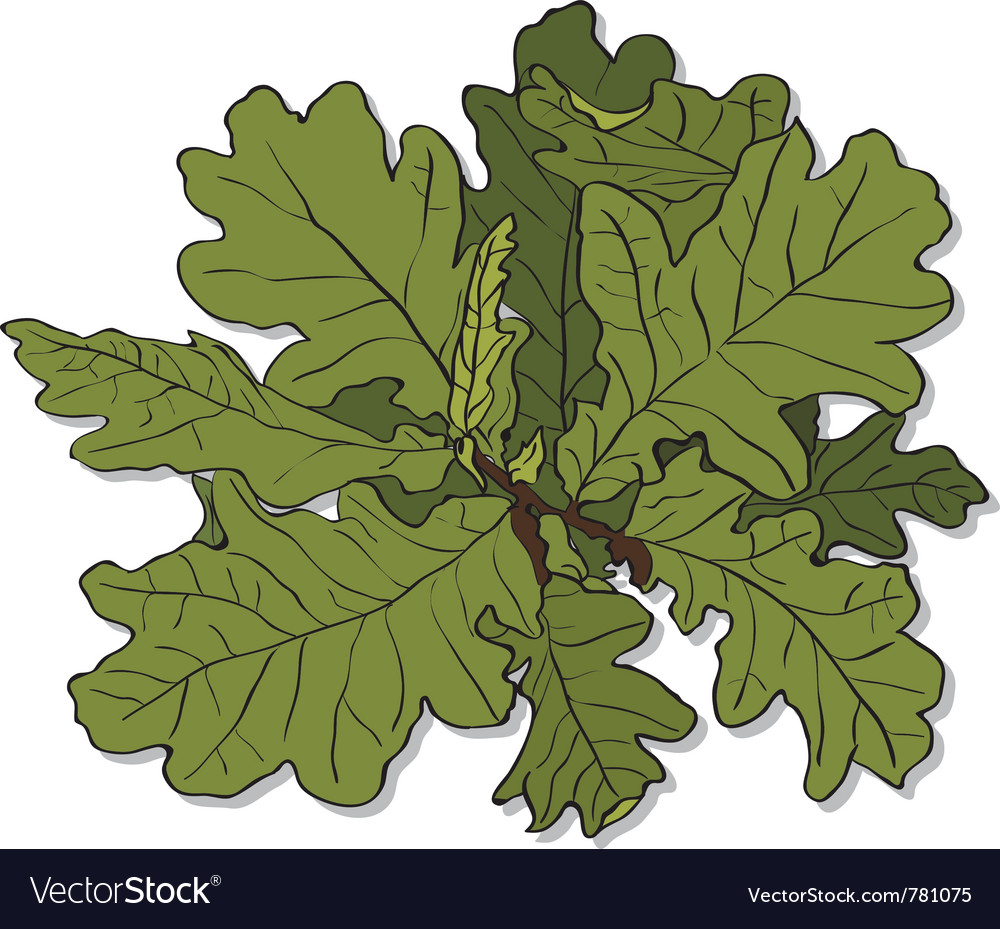 Branch of an oak vector | Price: 1 Credit (USD $1)