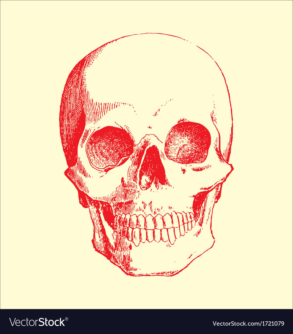 Skull sketch vector | Price: 1 Credit (USD $1)