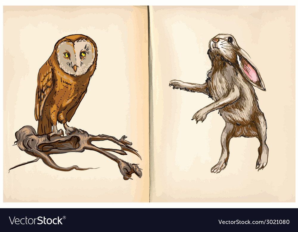 Owl and rabbit - an hand drawn vector | Price: 1 Credit (USD $1)
