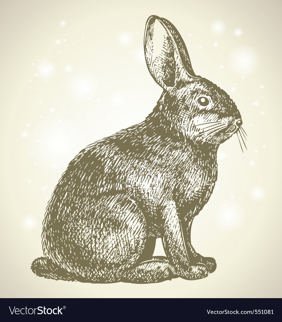 Bunny sketch vector | Price: 1 Credit (USD $1)