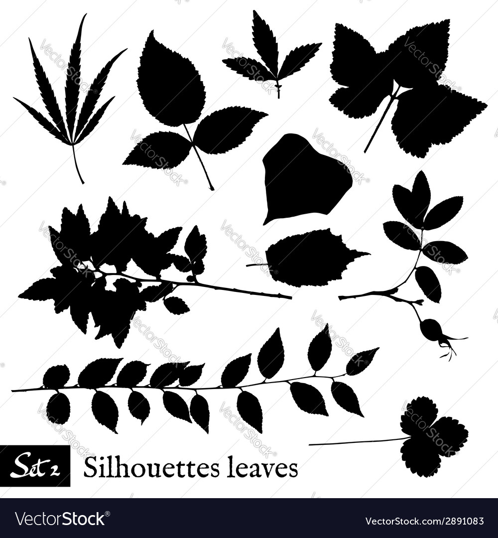 Set of leaf silhouettes isolated on white vector | Price: 1 Credit (USD $1)