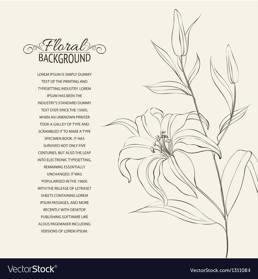 Lily flower isolated over white vector   Price: 1 Credit (USD $1)
