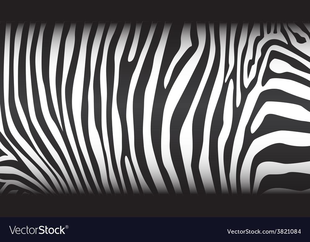 Zebra pattern vector | Price: 1 Credit (USD $1)