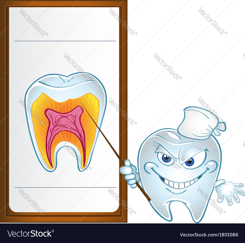 Tooth with pointer display teeth in section vector | Price: 3 Credit (USD $3)