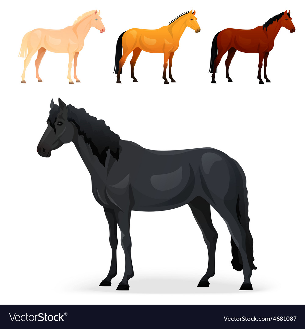 Set of realistic horse with different coats vector | Price: 1 Credit (USD $1)
